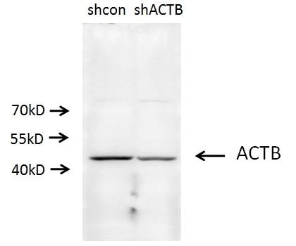 20536-1-AP;A549 cells