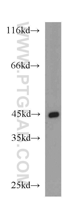 20536-1-AP;Jurkat cells