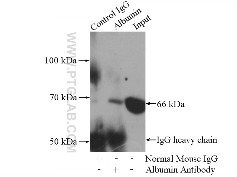 IP experiment of HepG2 using 66051-1-Ig