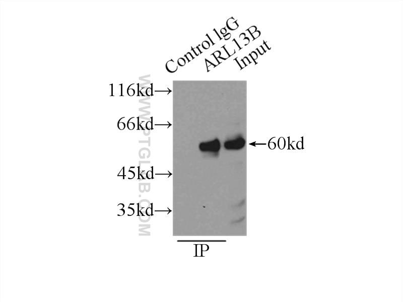 IP experiment of L02 using 17711-1-AP