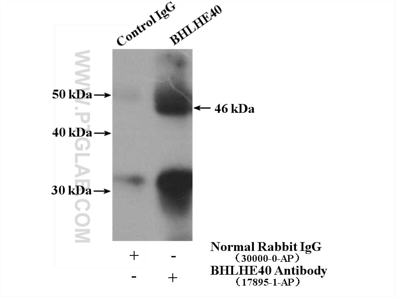 IP experiment of SGC-7901 using 17895-1-AP