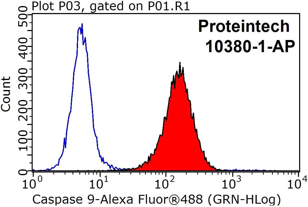 10380-1-AP;HepG2 cells