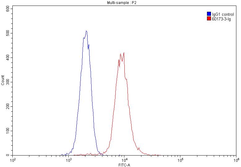FC experiment of Jurkat using 60173-3-Ig