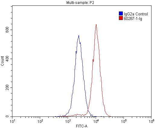 FC experiment of Raji using 60287-1-Ig