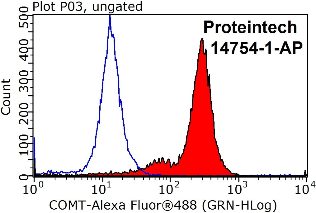 COMT Antibody 14754-1-AP | Proteintech