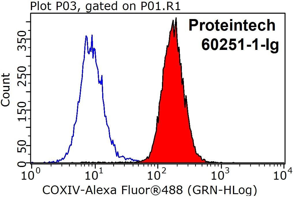 60251-1-Ig;HeLa cells