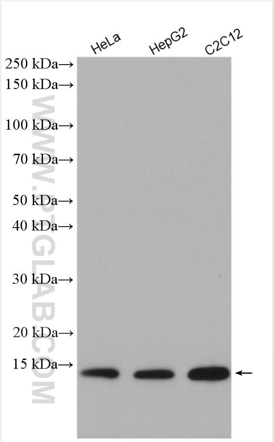 WB analysis using 10993-1-AP