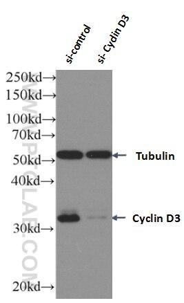 WB analysis of Jurkat using 66357-1-Ig