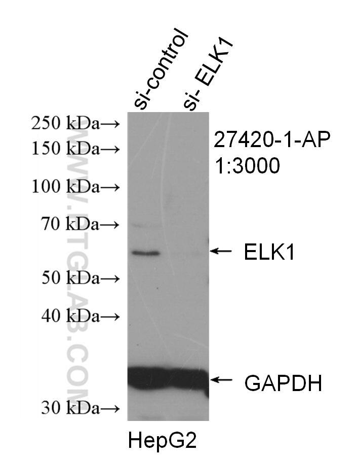 WB analysis of HepG2 using 27420-1-AP
