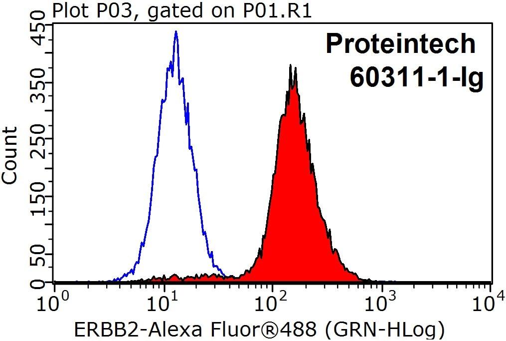 FC experiment of HeLa using 60311-1-Ig