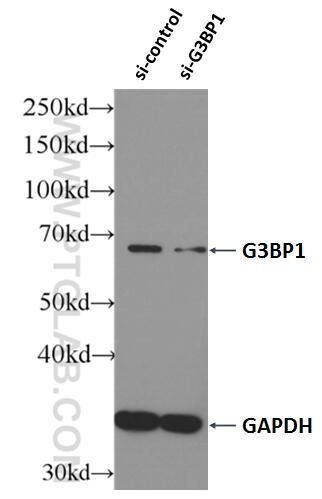 WB analysis of HEK-293 using 13057-2-AP