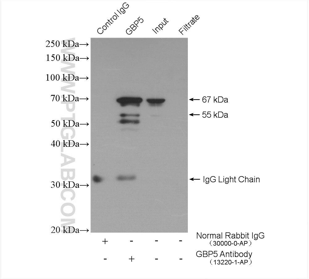 IP experiment of U-937 using 13220-1-AP