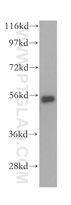 WB analysis of HepG2 using 16152-1-AP