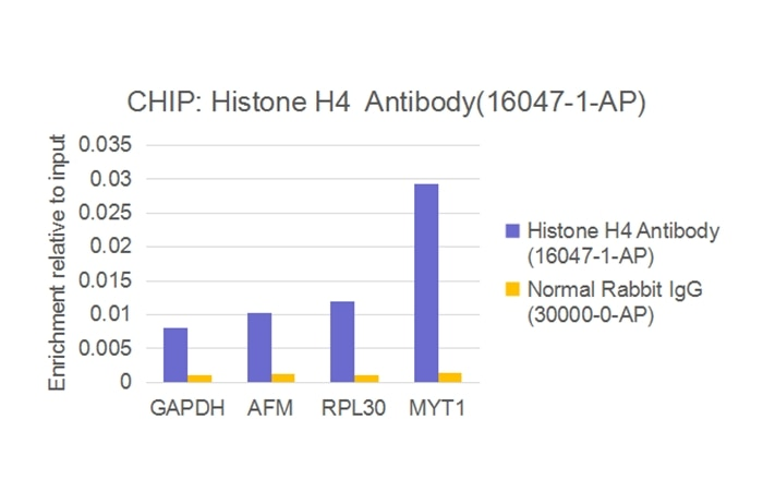 ChIP experiment of HEK-293 using 16047-1-AP