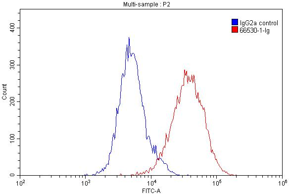 FC experiment of THP-1 using 66530-1-Ig