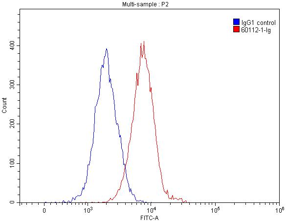 FC experiment of HEK-293 using 60112-1-Ig