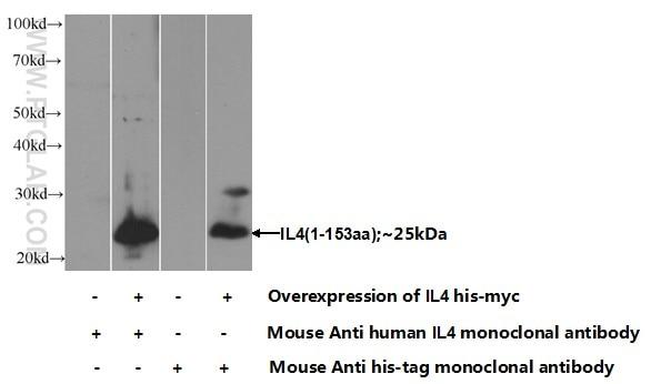 IL-4 Monoclonal antibody