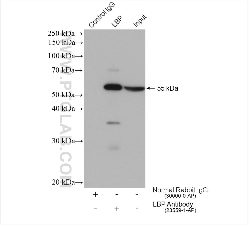 IP experiment using 23559-1-AP