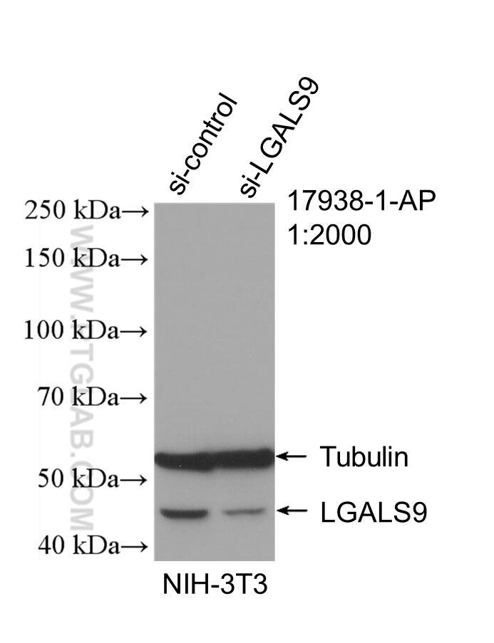 WB analysis of NIH/3T3 using 17938-1-AP