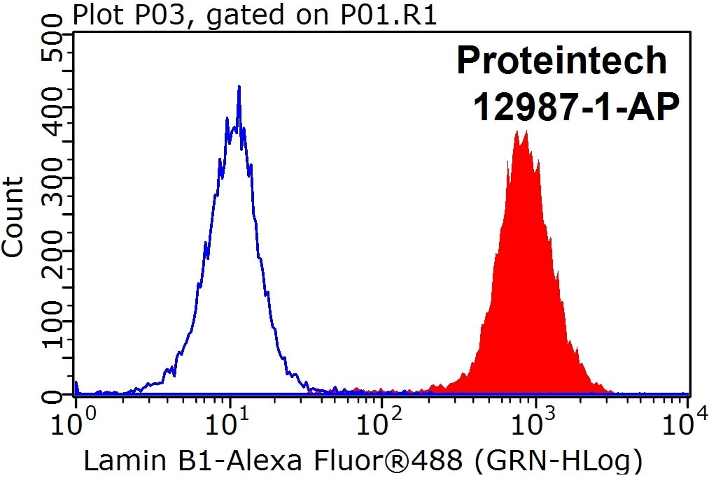 12987-1-AP;HEK-293 cells