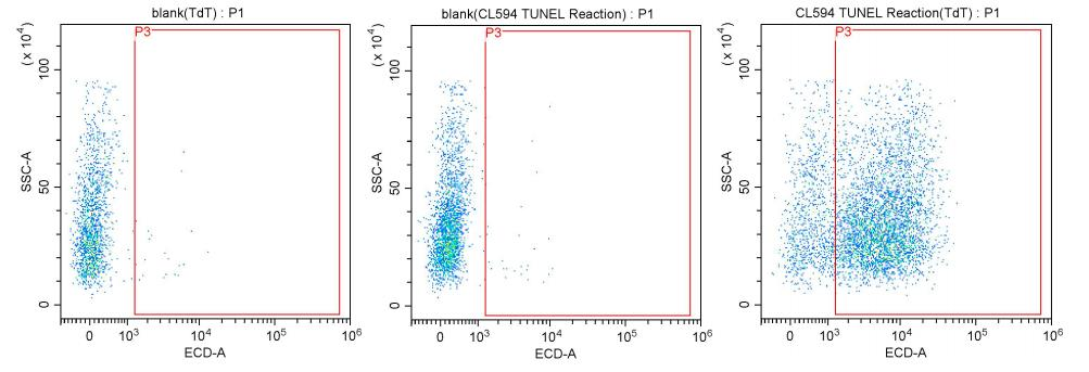 The above experimental results are based on Jurkat cells cultured for three days to perform a flow cytometry experiment to detect the apoptotic cells in the cell sample.