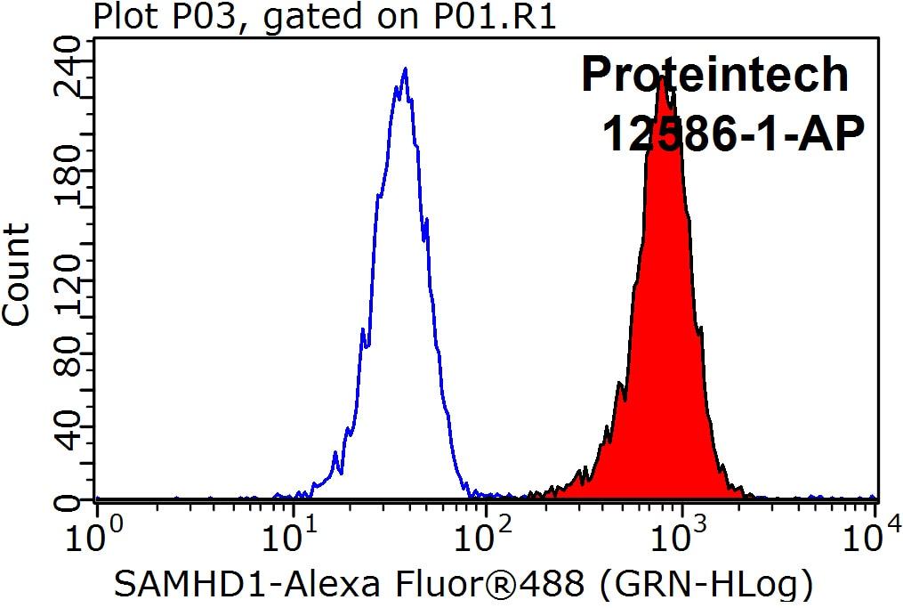 12586-1-AP;K-562 cells