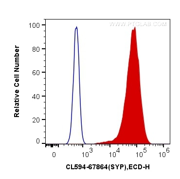 FC experiment of PC-12 using CL594-67864