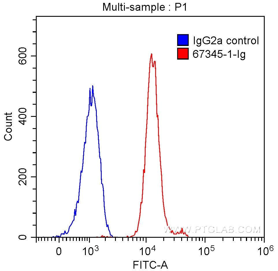 FC experiment of HeLa using 67345-1-Ig