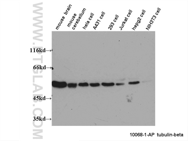 10068-1-AP;multi-cells/tissue