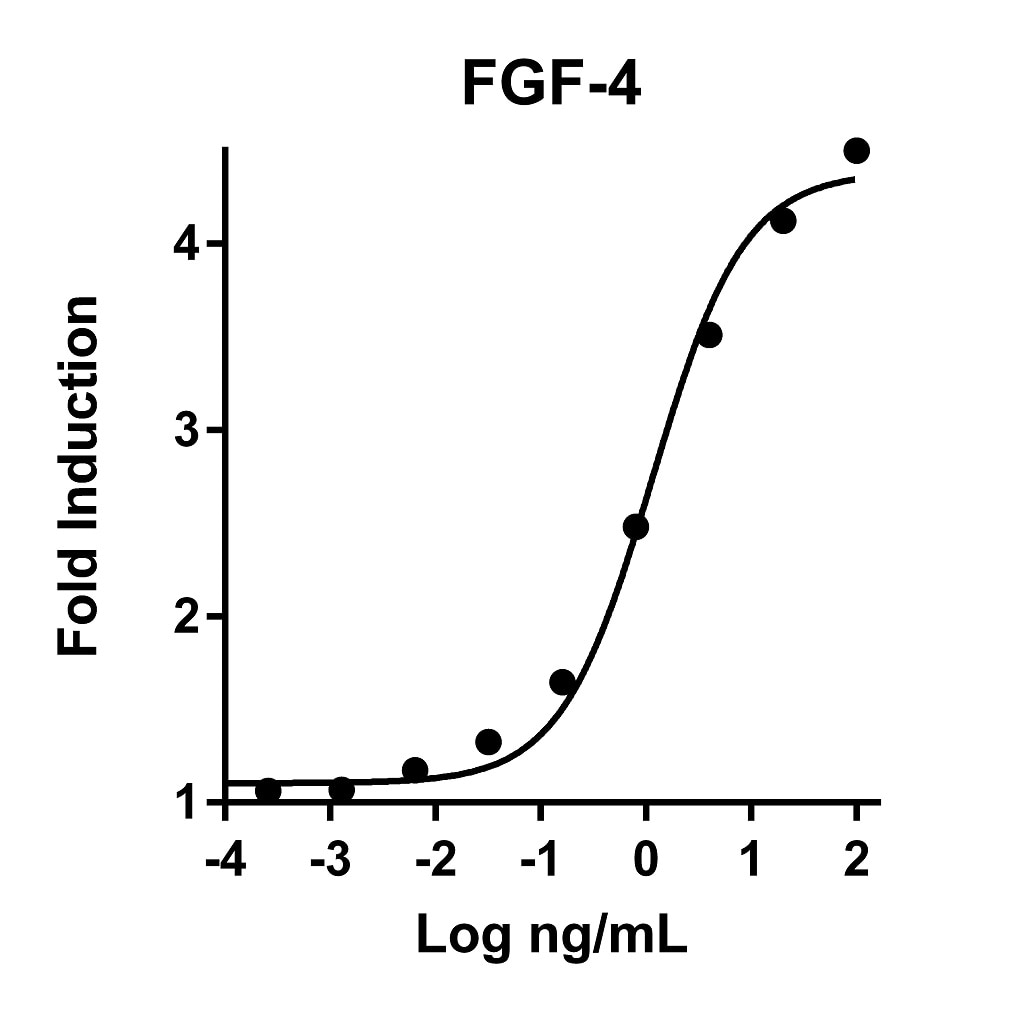 Recombinant Human FGF-4 Graph