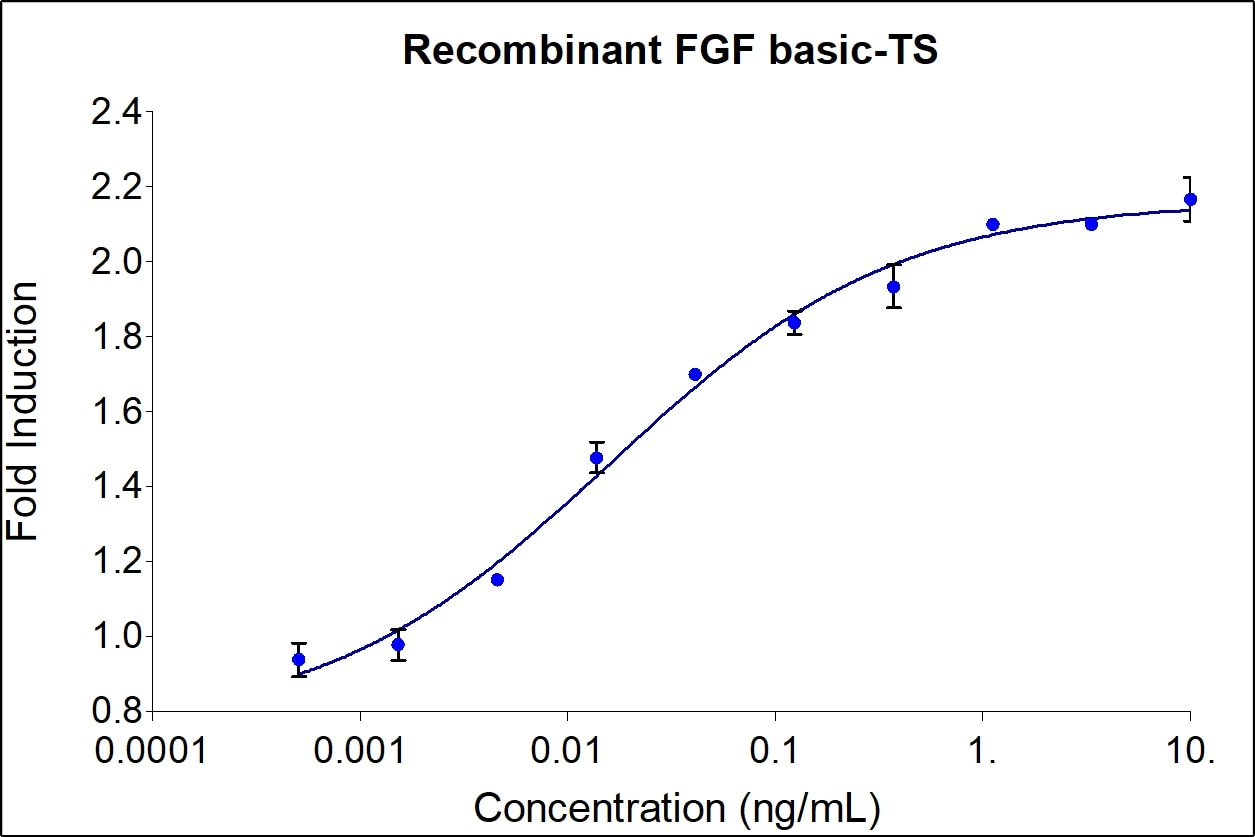 FGFBasic-TS activity assay
