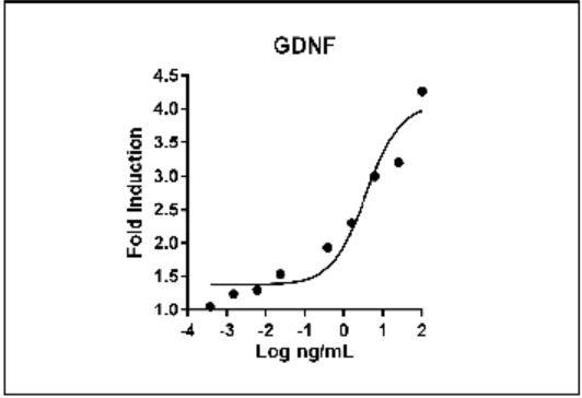 GDNF activity assay