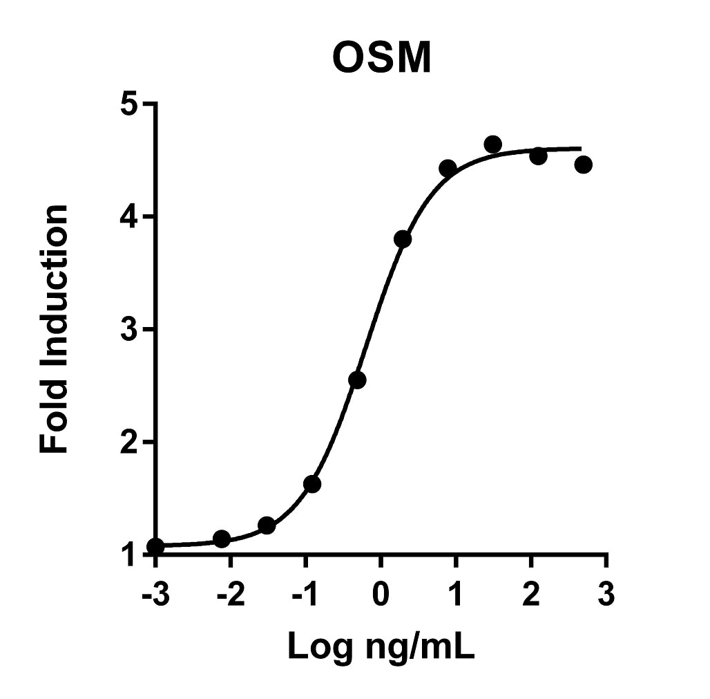 OSM activity assay