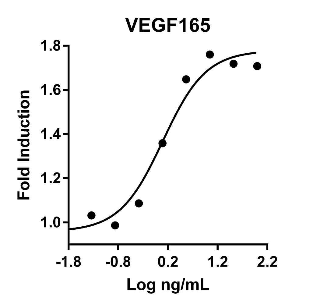Recombinant Human VEGF165 Graph