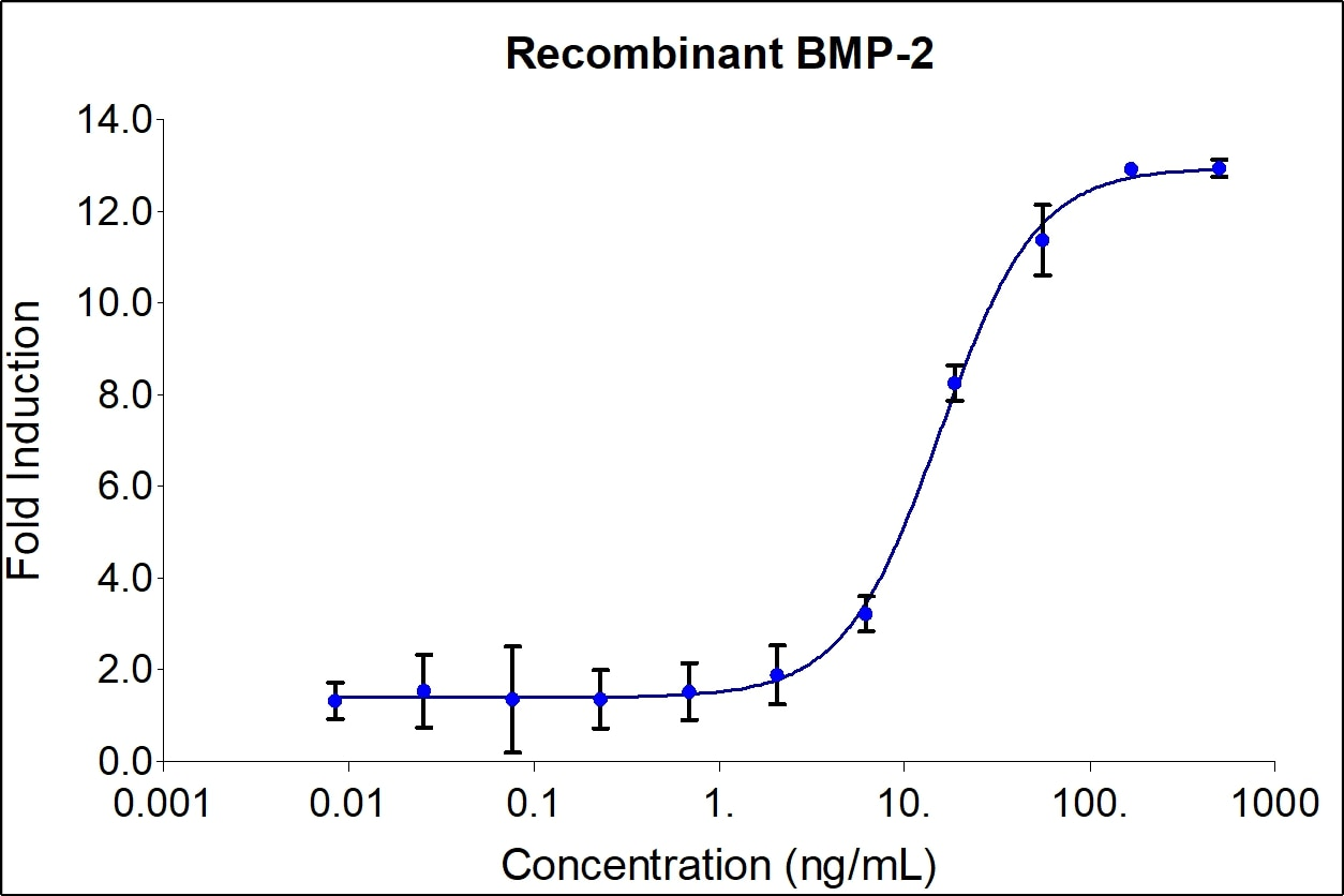 BMP-2 activity assay