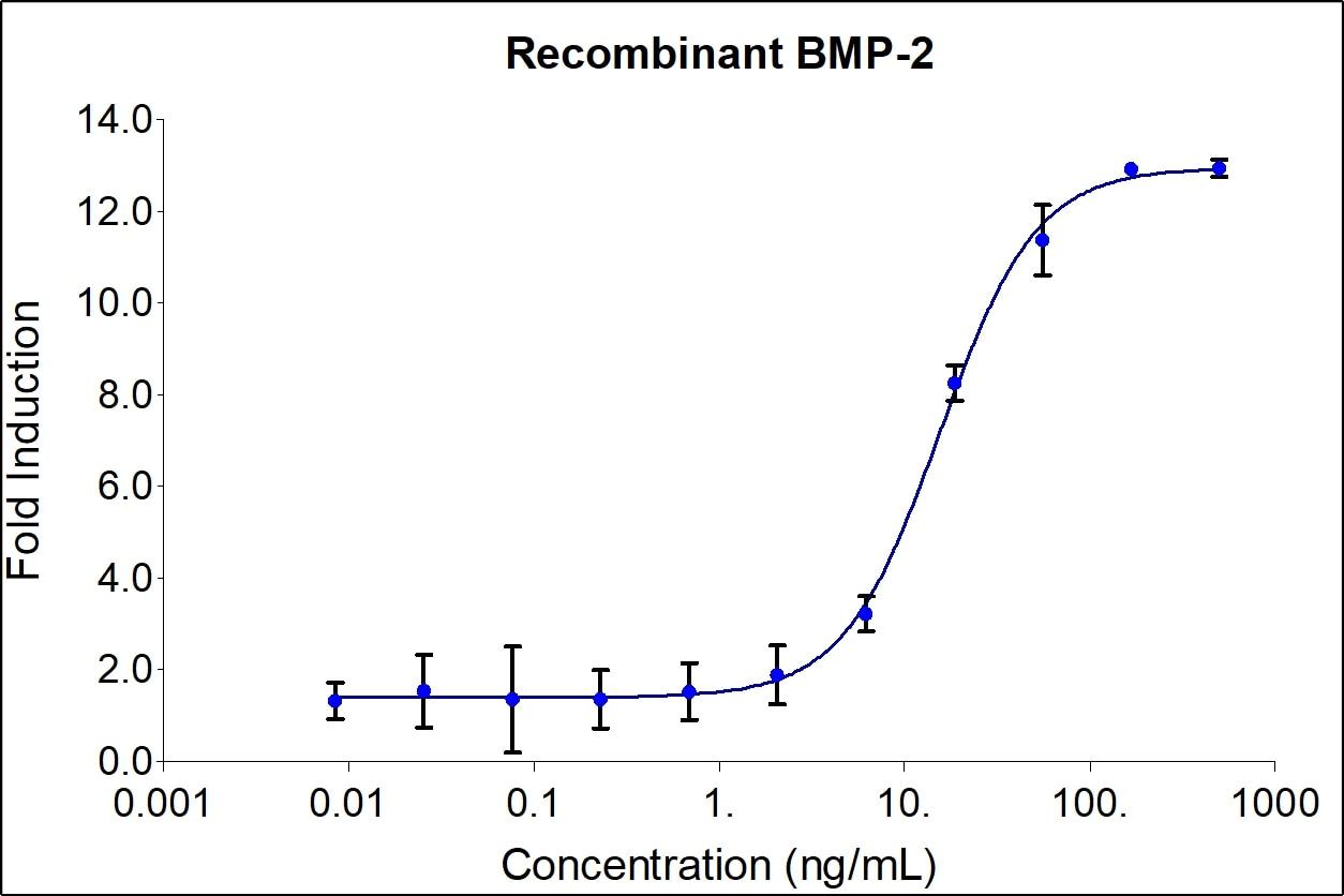 Recombinant Human BMP-2 Graph
