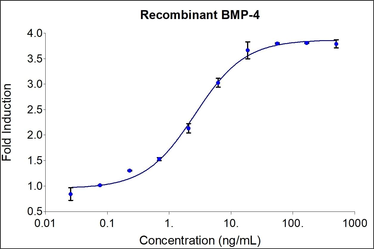 Recombinant Human BMP-4 Graph