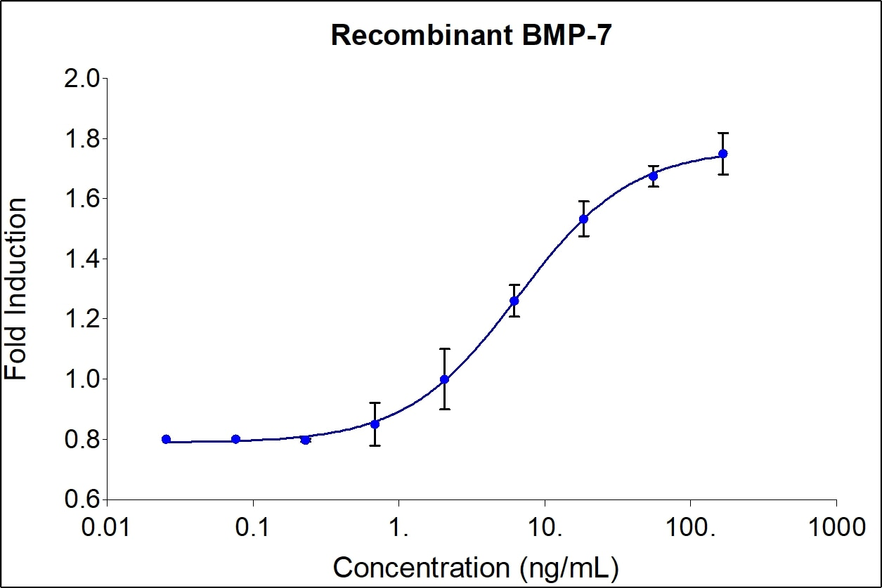 BMP-7 activity assay