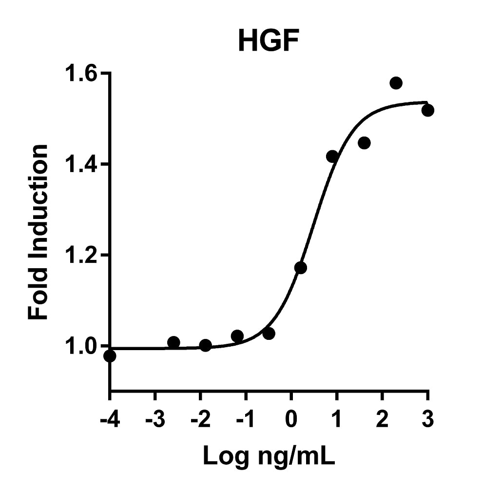 HGF activity assay