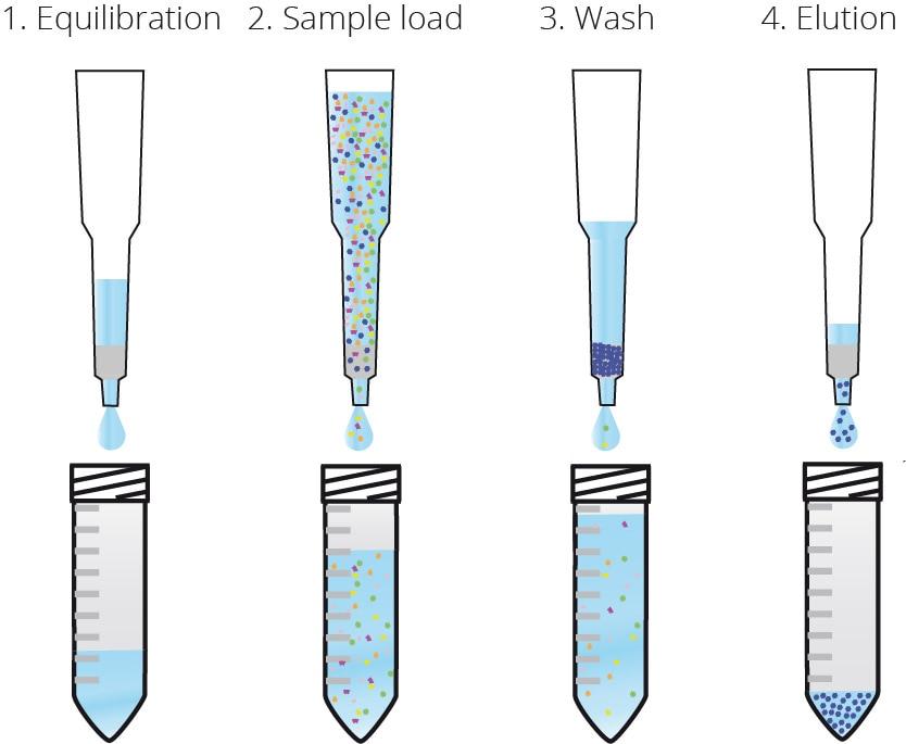 Workflow of Spot-Cap purification.