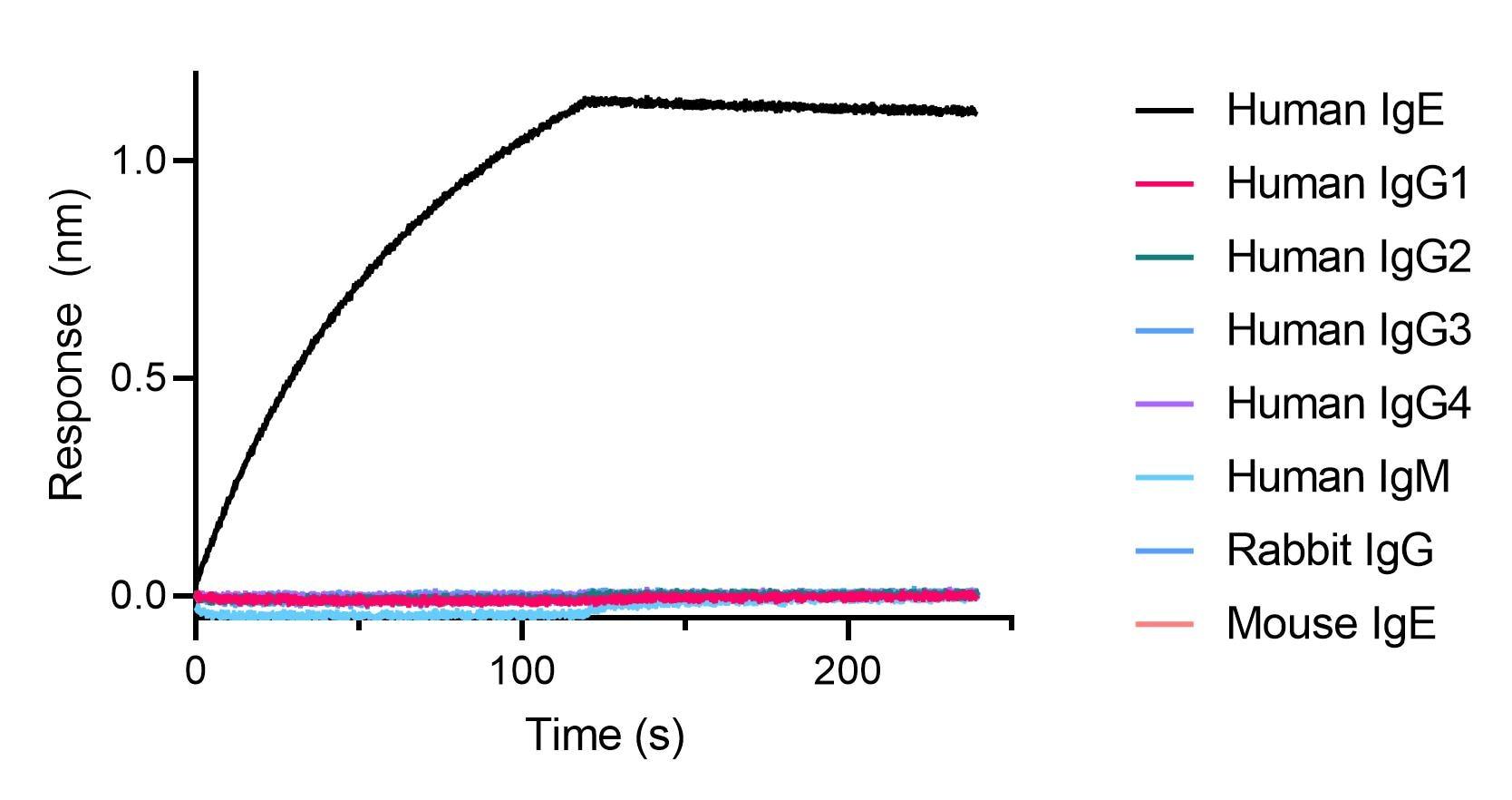 BLI binding kinetics of human, mouse and rabbit antibodies. 20 nM of human, mouse and rabbit antibodies were immobilized using Nano-CaptureLigand human IgE, VHH, biotinylated on FortéBio Streptavidin (SA) Biosensors. Only human IgE antibody is captured by the Nano-CaptureLigand with negligible dissociation.