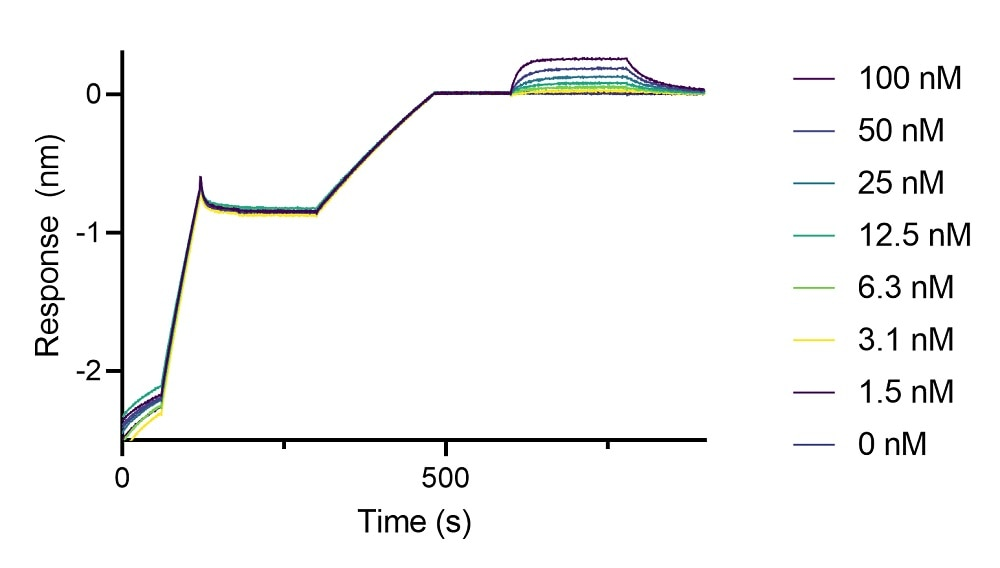 BLI binding kinetics of a human anti-GFP Fab fragment to eGFP. A synthetic human anti-GFP lambda Fab fragment was immobilized using Nano-CaptureLigand human Ig, lambda-LC-specific VHH, biotinylated on FortéBio Streptavidin (SA) Biosensors and assayed with different concentrations of eGFP (ChromoTek EGFP, recombinant protein).