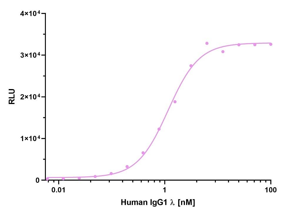 ELISA capture of a human IgG1 lambda antibody using Nano-CaptureLigand human Ig, lambda-LC-specific VHH, biotinylated. 50 nM Nano-CaptureLigand human Ig, lambda-LC-specific VHH, biotinylated was used for coating on an avidin-coated MaxiSorp plate. Human IgG1 lambda antibody was titrated in a 1:2 dilution series and detected with an alkaline phosphatase-conjugated detection antibody.