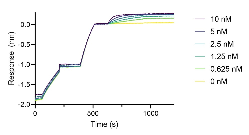 BLI binding kinetics of a human IgG1 anti-IgE antibody to human IgE. A human IgG1 anti-IgE antibody was immobilized using Nano-CaptureLigand human IgG/rabbit IgG, Fc-specific VHH, biotinylated on FortéBio Streptavidin (SA) Biosensors and assayed with different concentrations of human IgE.
