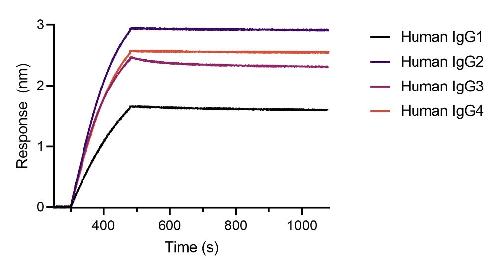 BLI binding kinetics of different human IgG antibodies. Different monoclonal human IgG antibodies were immobilized using Nano-CaptureLigand human IgG/rabbit IgG, Fc-specific VHH, biotinylated on FortéBio Streptavidin (SA) Biosensors. All four human IgG subclasses are stably captured by the Nano-CaptureLigand with negligible dissociation.