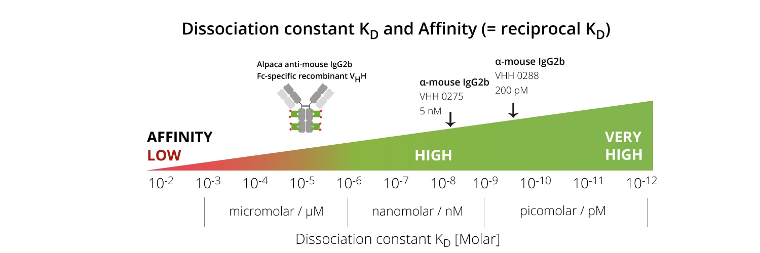 Dissociation constant Kd and affinity.