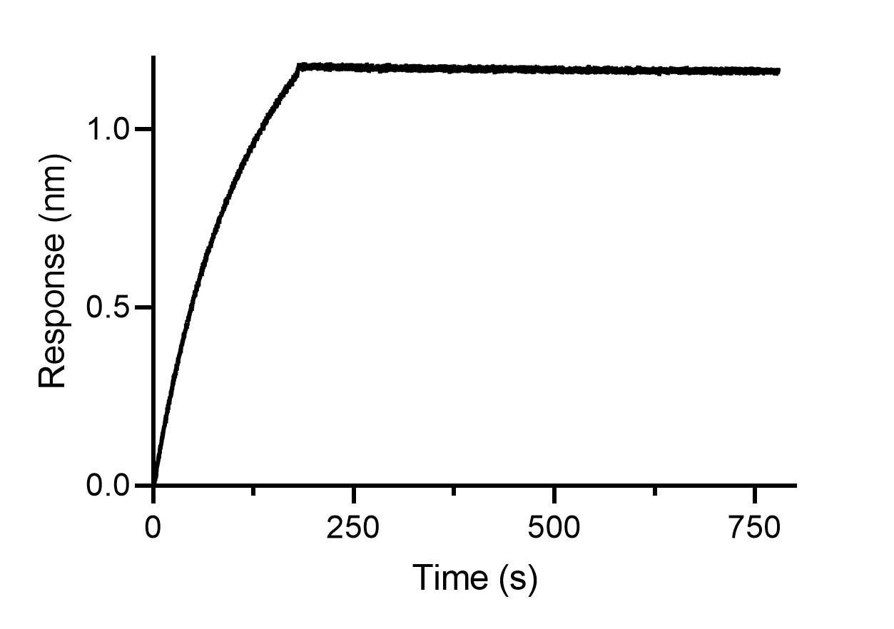 BLI binding kinetics of a mouse IgE antibody. 20 nM mouse IgE antibody was immobilized using Nano-CaptureLigand mouse IgE, VHH, biotinylated on FortéBio Streptavidin (SA) Biosensors. Mouse IgE is stably captured by the Nano-CaptureLigand with negligible dissociation.