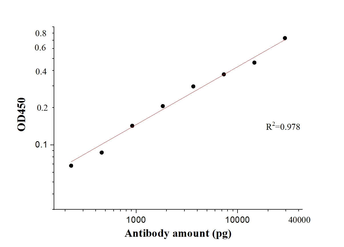 ELISA experiment of Recombinant protein using 28901-1-AP