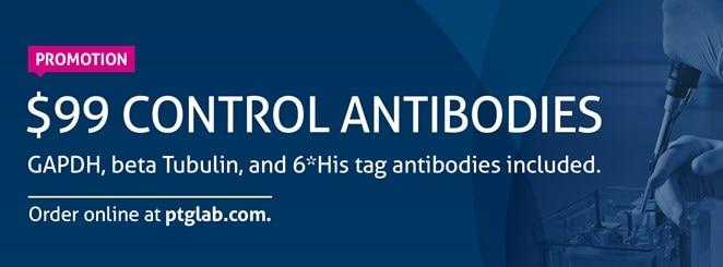 Autophagy: LC3 & GABARAP Antibodies | Proteintech Group