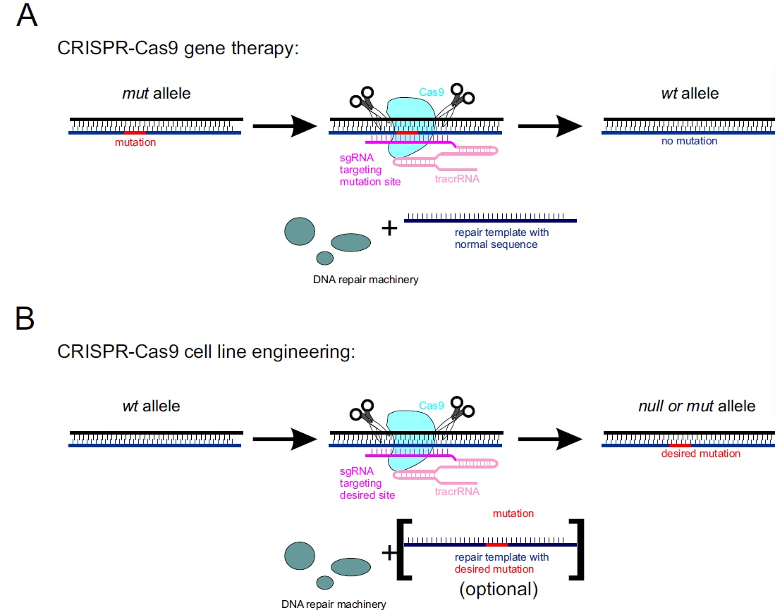 CRISPR-Cas9, TALENs and ZFNs - the battle in gene editing